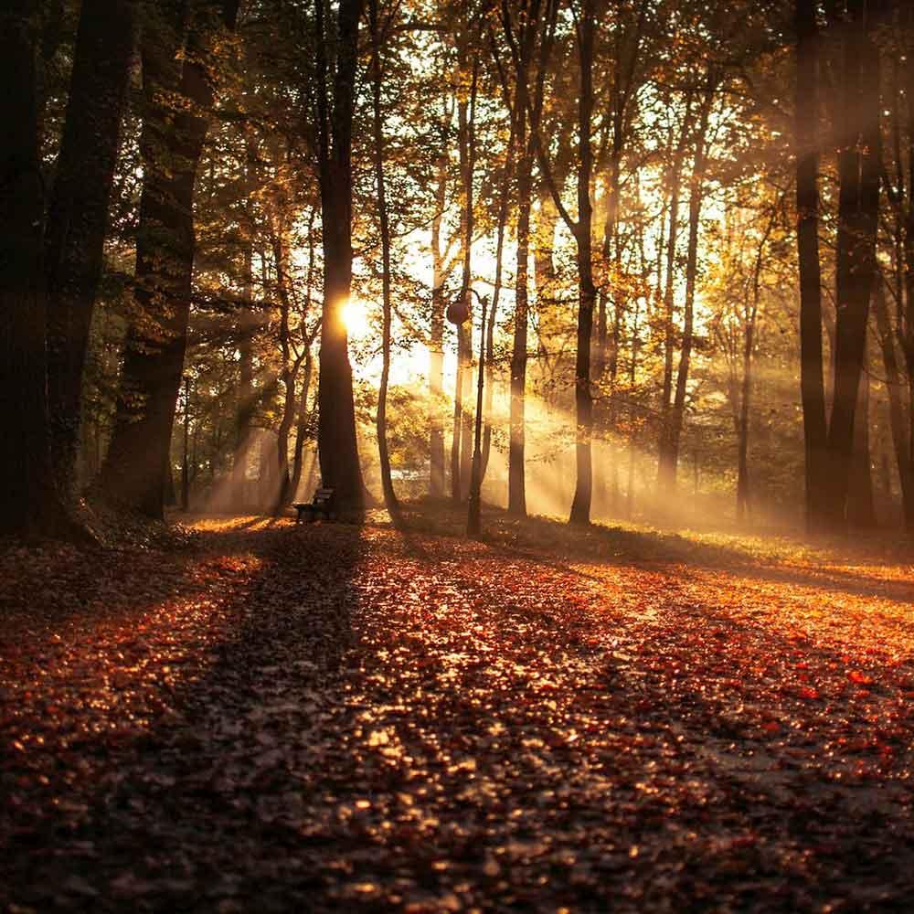 BE Trails at Azuridge